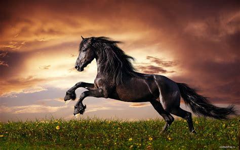 google themes horse horse chrome web store
