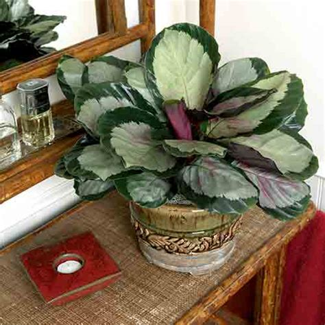 large low light indoor plants large house plants low light 10 best low light houseplants