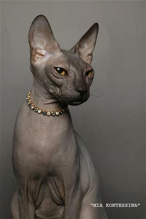 ??????? ??????: ???????????   ?????? ?????   CATS ??????