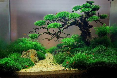 fish tank aquascape 100 aquascape ideas aquariums driftwood and fish tanks