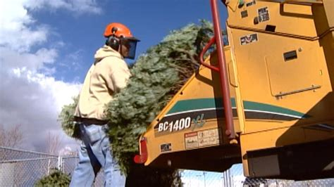 several communities begin their christmas tree recycling