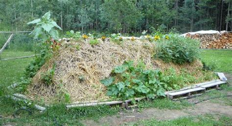 hugelkultur raised beds the many benefits of hugelkultur permaculture magazine