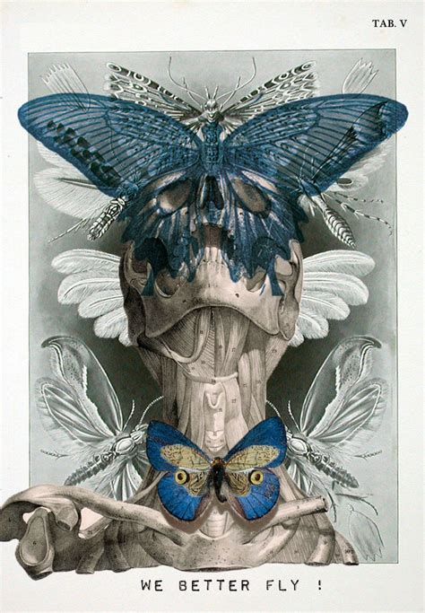 designboom tumblr isabelle dalle digital anatomical portraits