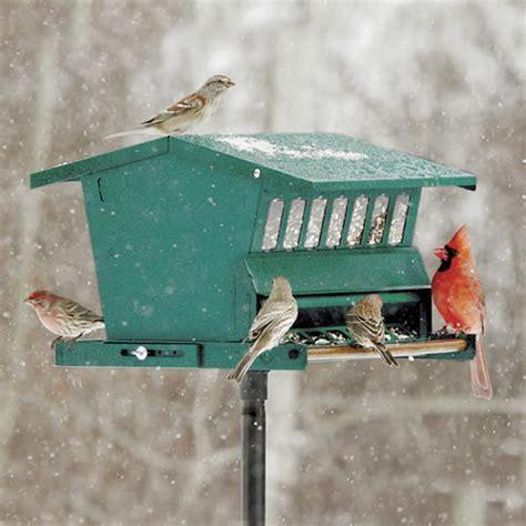 duncraft com original absolute squirrel proof bird feeder