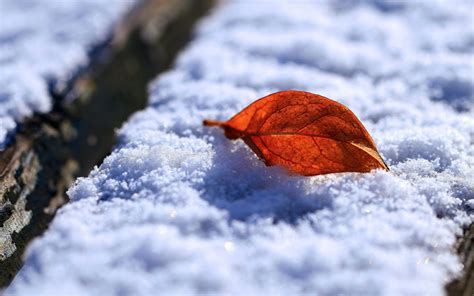 Snow Images | wallpapers leaf and snow wallpapers
