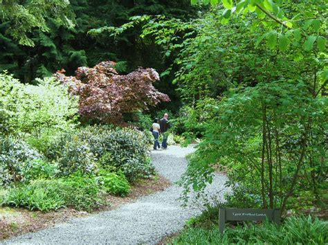 Rhododendron Species Botanical Garden Get Involved Rhododendron Species Botanical Garden