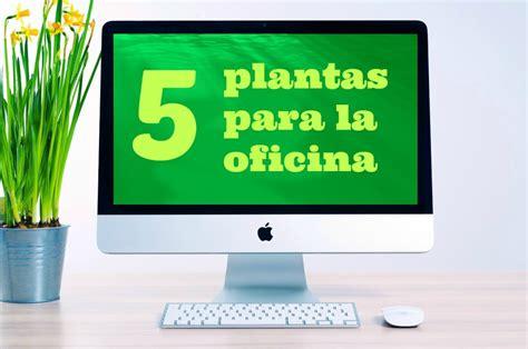 cuidados de la planta del dinero plantas y flores - Floreros Para Oficina