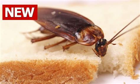 How To Get Rid Of Roaches In Bedroom by 152 Best Images About For The Home On Recycled