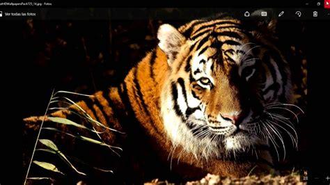imagenes de animales salvajes gratis im 225 genes de animales en hd para fondo de pantalla youtube