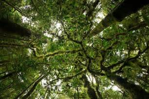 Forest Canopy Foja Mountains Papua Indonesia 169 Tim Laman Plants
