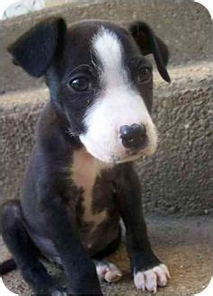 bojack puppies 17 best images about bojack on blue heeler my name is and terrier