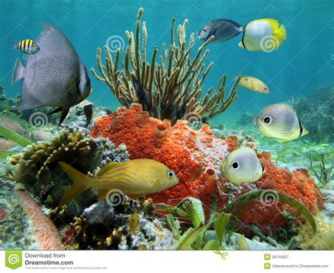 underwater life of a coral reef royalty free stock