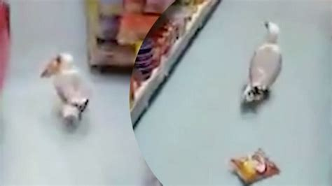 Weirdest Ownership Claims by Store Owner Claims He S Targeted By Serial Shoplifter