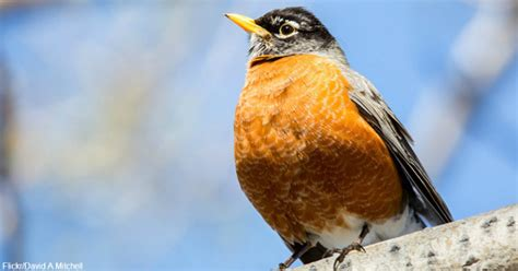 fly south for the winter not so for some birds the