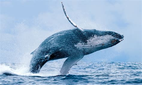 go check out the whales before they go back home