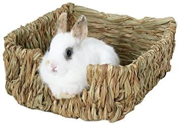 bunny bed rabbit brush bunny brush rabbit bed bunny bed bunny