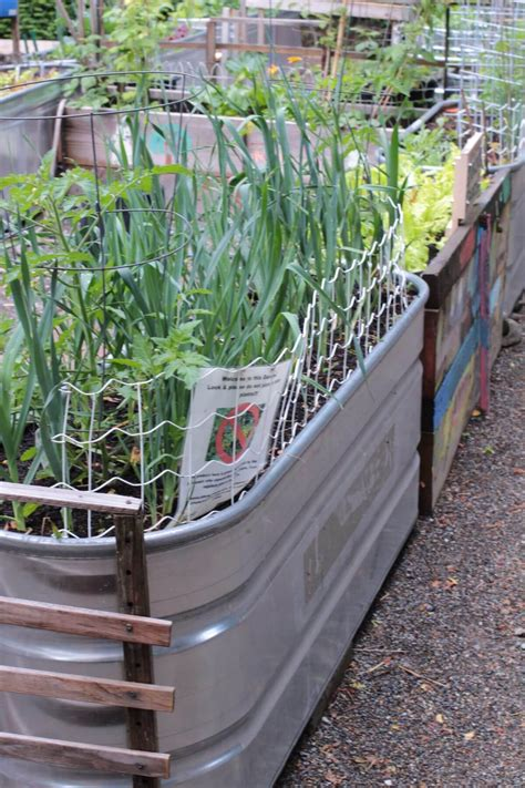 galvanized trough planters galvanized trough planters www imgkid the image