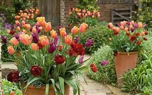 Best Garden Flowers Les Meilleures Tulipes Pour Petit Jardin Ou Balcon My Jardin My Jardin