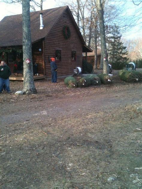 charlie brown s christmas tree farm alberi di natale