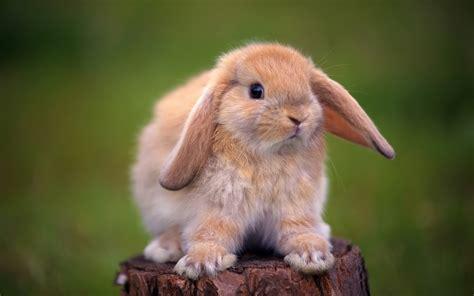 Kelinci Imut Lucu kelinci lucu dan imut animal planet