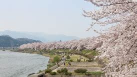 akita, japan discount cruises, last minute cruises