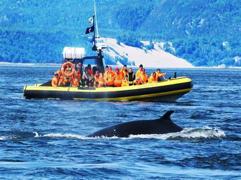 boat tour quebec bus whale express package qu 233 bec boat tours qu 233 bec