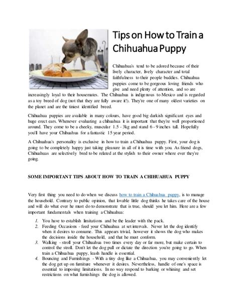 how to puppy a tips on how to a chihuahua puppy