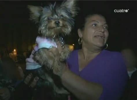 perro coje a mujer bonita c mo educar a tu cachorro a no morder apexwallpapers com