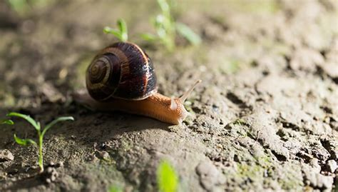 where can you find snails in your backyard 28 images