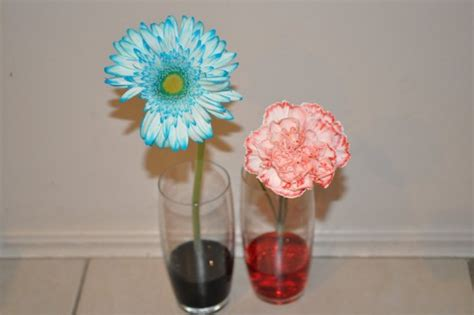 Coloured Glass Vase Showing Kids How Plants Drink With Colour Carnation Test