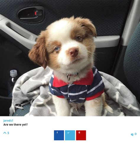 preppy puppy barkfeed the quot instagram for dogs quot is photographic fur therapy