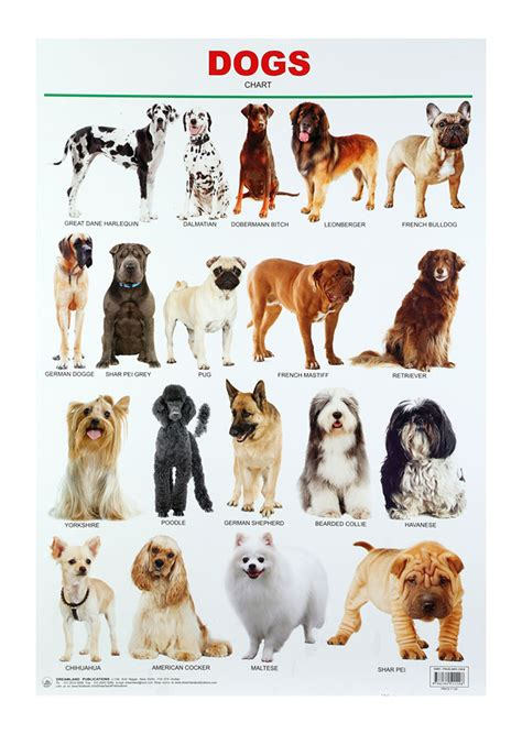 puppy calculator buy dreamland dogs chart in india kheliya toys