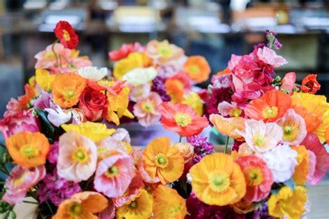 poppy flower colors the poppy flower a pretty meaningful bloom