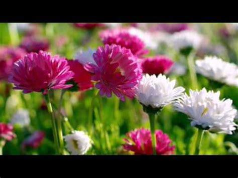 flower wallpaper hd youtube