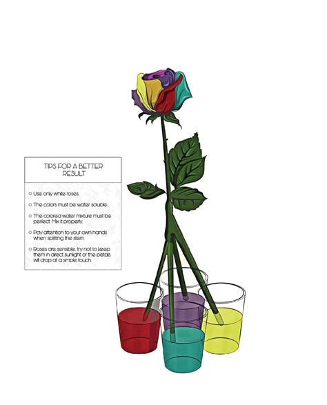 rainbow colored roses learn how to make simple colored and rainbow roses