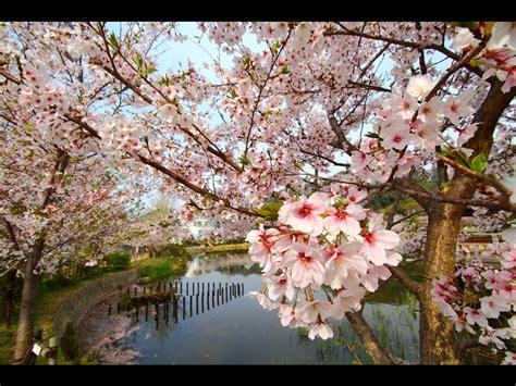 imagenes de paisajes japoneses anime nihaoo online paisajes desde jap 243 n