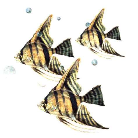 imagenes animadas gif para power point gifs animados de pez 193 ngel gifmania