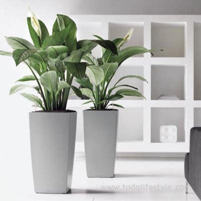 maceteros interior plantas de interior con autoriego interiores
