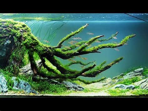 top acuarios aquascaping mas impresionantes del universo