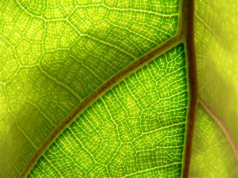 Pattern Within Nature   mr r s patterns in nature digital photography at life