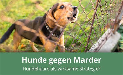 Mittel Gegen Marder Im Garten 835 by Was Tun Gegen Marder Was Tun Gegen Den Marder Im