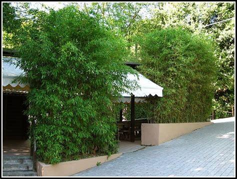 terrassen sichtschutz pflanzen sichtschutz terrasse pflanzen terrasse sichtschutz