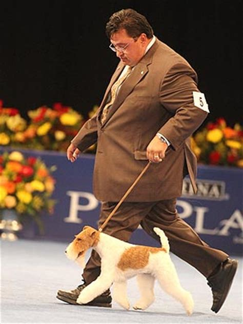 Dress 1972 Gch wire fox terrier sky wins best in show at national