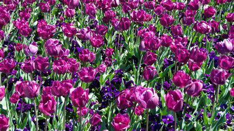 fiori di bach australiani fiori australiani stratfordseattle