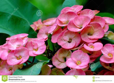 fiori esotici foto fiori esotici fotografia stock immagine 201422