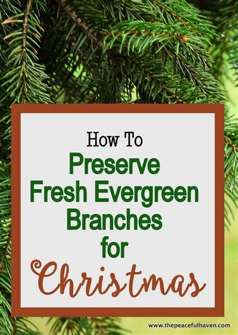 How To Preserve Tree Branches For Decoration by 1000 Ideas About Outdoor On