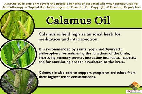 Calamus Root For Brain Detox by Brain Tonic Essential