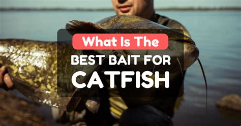 best bait what is the best bait for catfish and everything associated