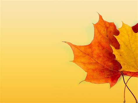 free autumn powerpoint templates autumn ppt background powerpoint backgrounds for free