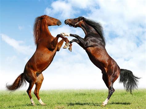 nice hourse horse horses wallpaper 23582505 fanpop